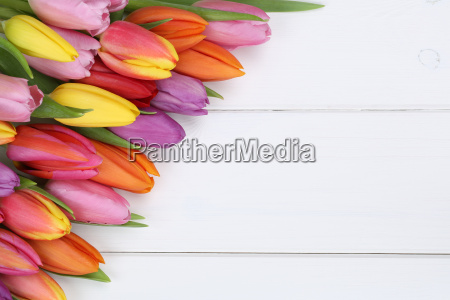 tulip flowers in spring or mother