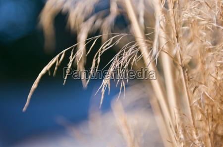 dry grass detail