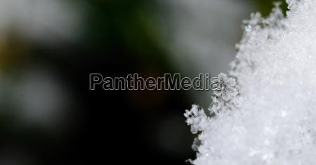 crystal flower snow panorama