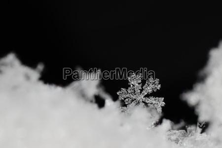 beautiful clear snow crystal