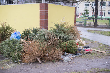 discarded christmas trees garbage after christmas