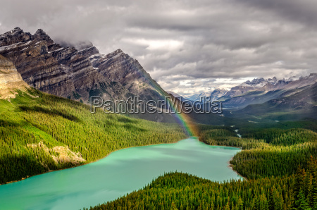 scenic mountain view of peyto lake