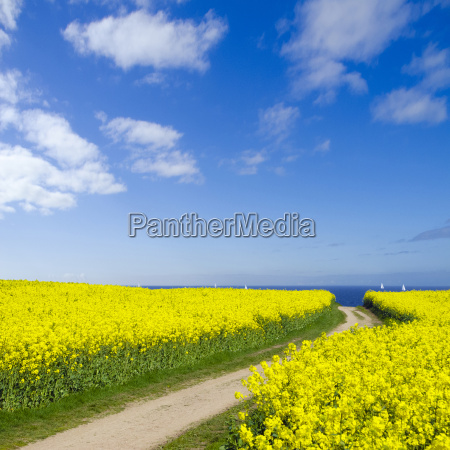dirt road to the baltic sea
