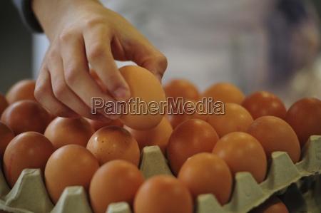 egg eggs food food nutrition health