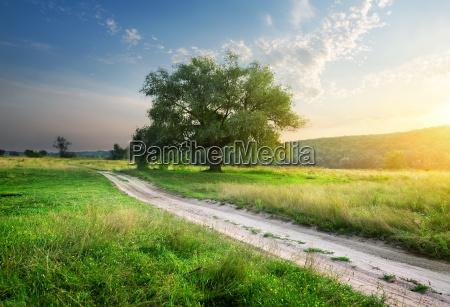 footpath, in, field - 13705018