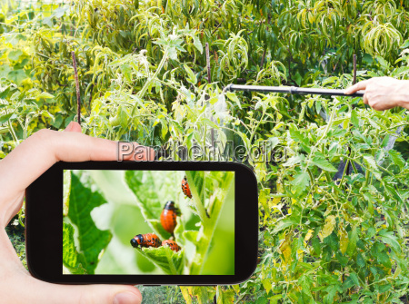 man taking photo of spraying insecticide