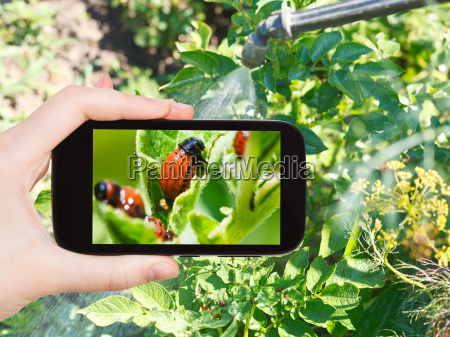 man taking photo of processing pesticide