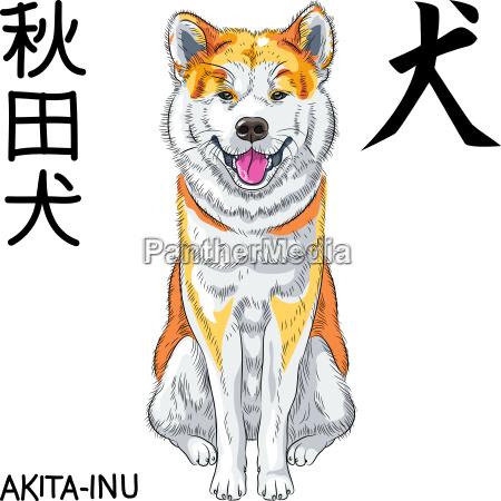 vector sketch dog akita inu japanese