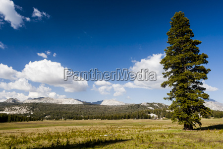 tree on a meadow at the