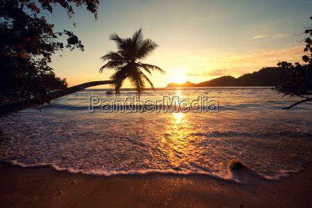 summer sun palm beach