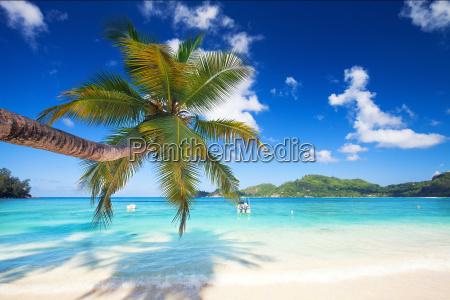 palm tree on dream beach