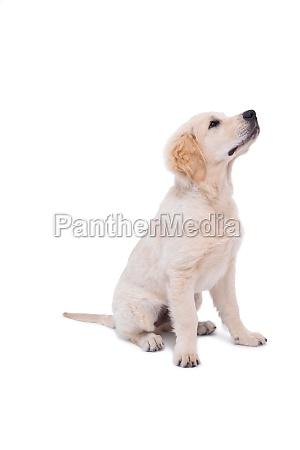 cute puppy looking upwards