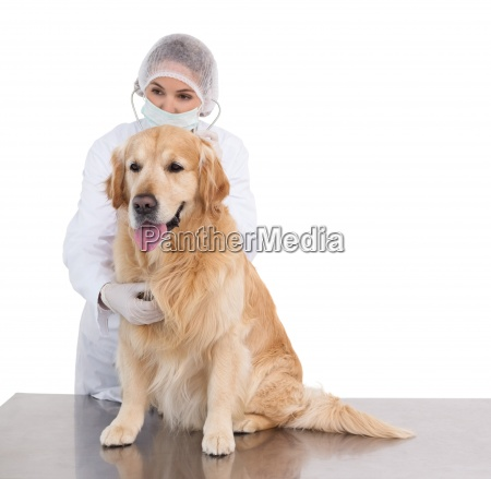 vet getting ready for surgery