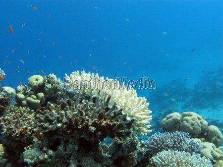 coral reef with white stony coral