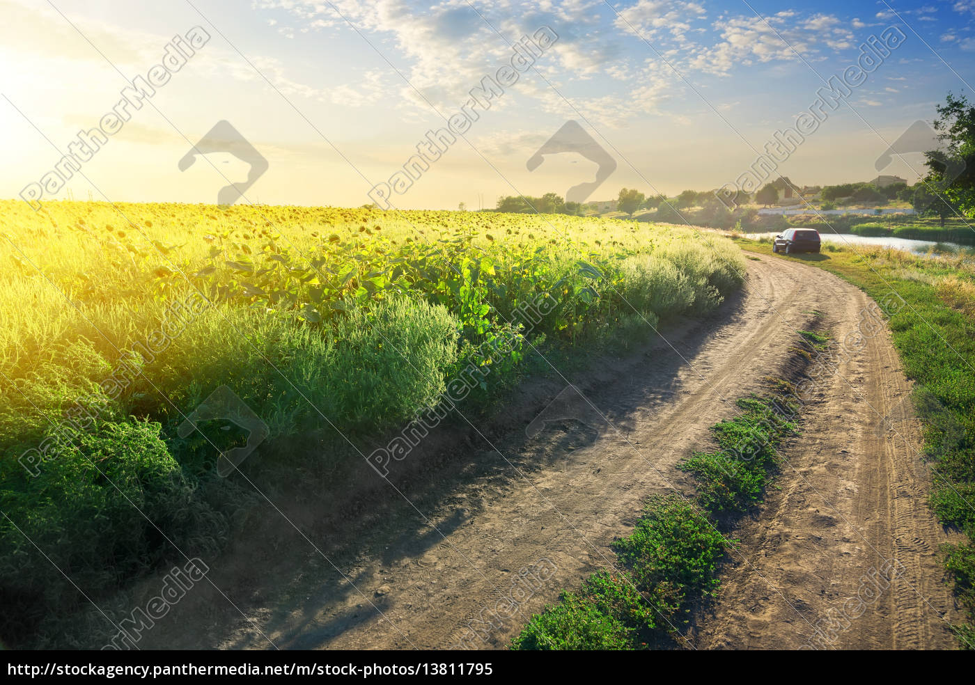 sunflowers, by, the, road - 13811795