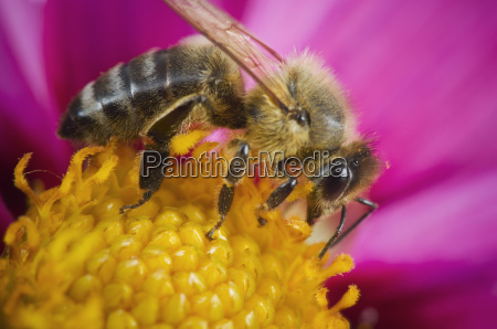 one bee on flowers stamp