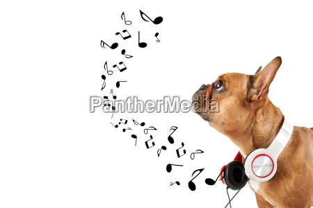 dog listens to music