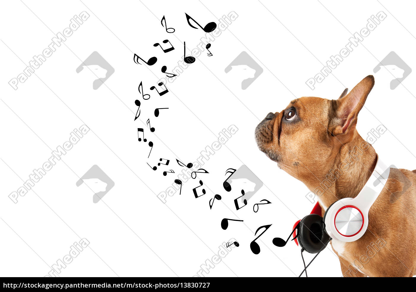 dog, listens, to, music - 13830727