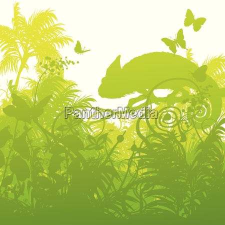 chameleon in the urwand