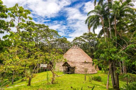 lodge in the jungle
