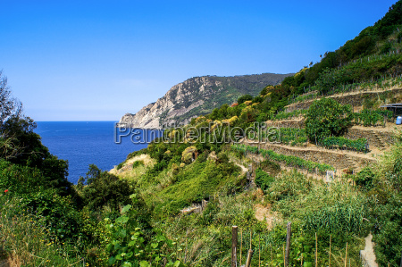hiking trail overlooking vineyards and sea