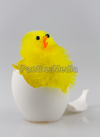 chick in eggshell