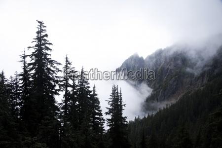 a landscape image of a foggy