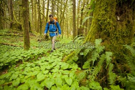 david cole hiking through a rainforest