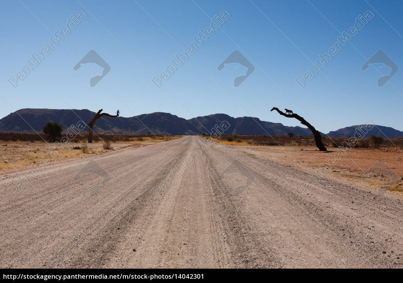 blue, travel, horizon, animal, tourism, africa - 14042301