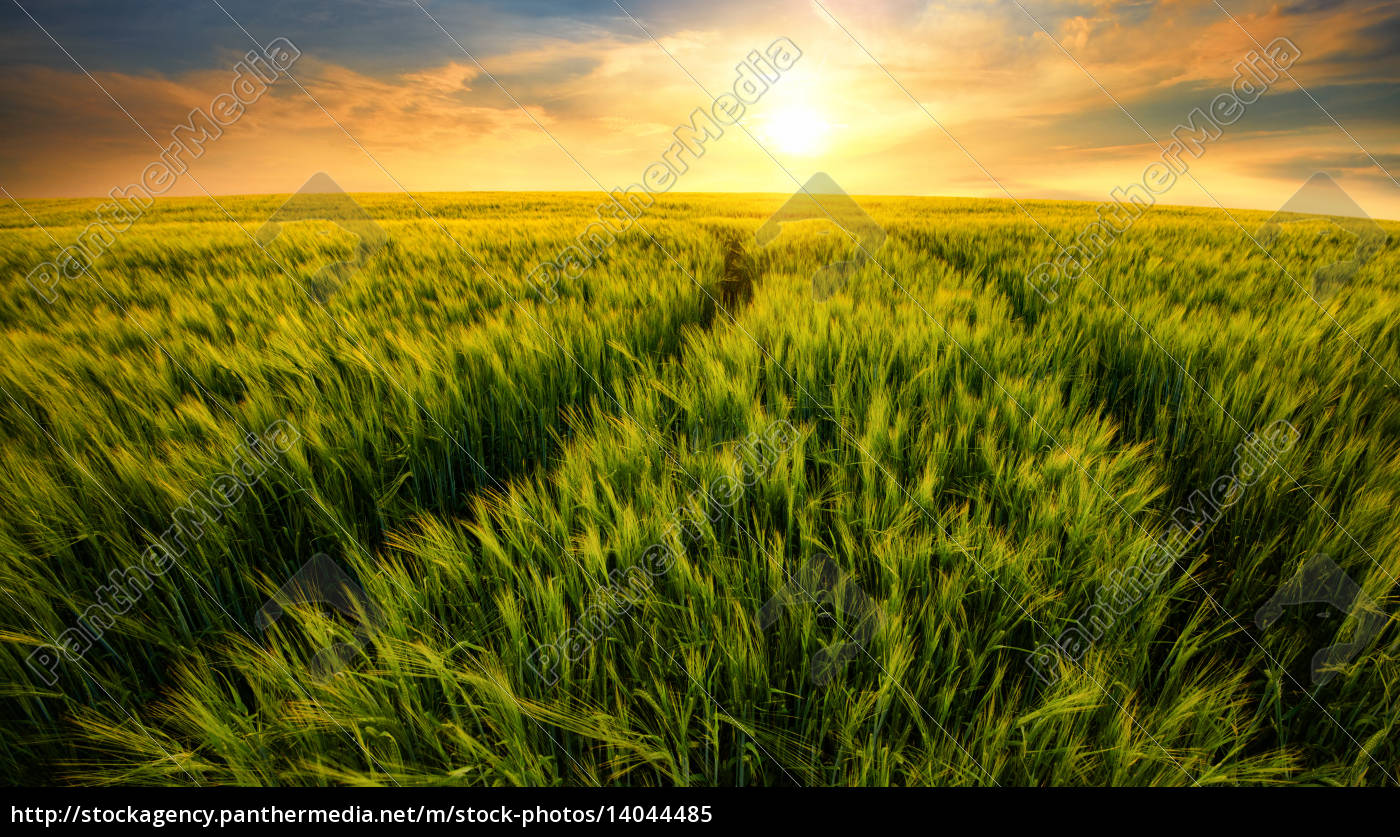 field, leads, to, the, sun - 14044485