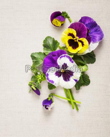 greeting, arrangement, leaf, macro, close-up, macro admission - 14045659