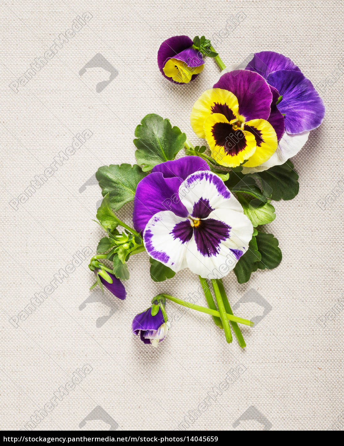 pansies, greeting, card - 14045659