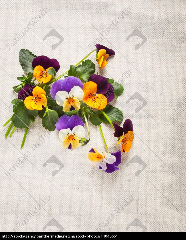 pansies, greeting, card - 14045661
