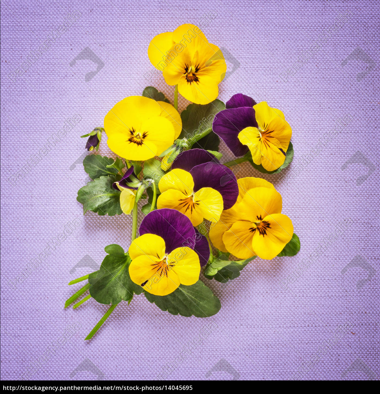 pansies, greeting, card - 14045695