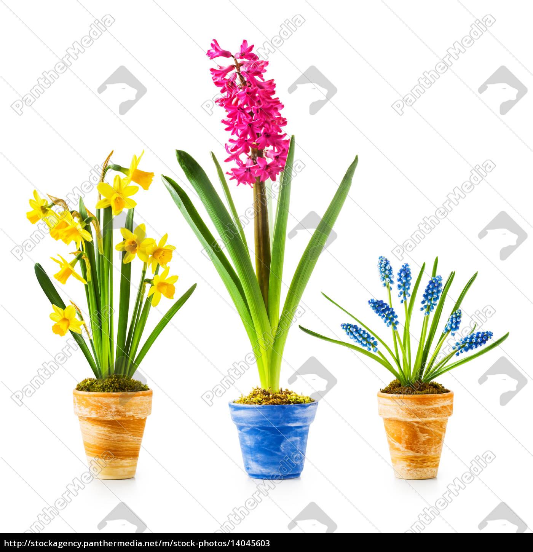 spring, flowers - 14045603