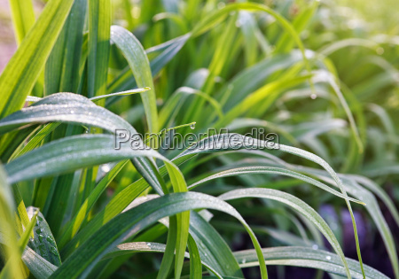 droplets, on, grass - 14050581