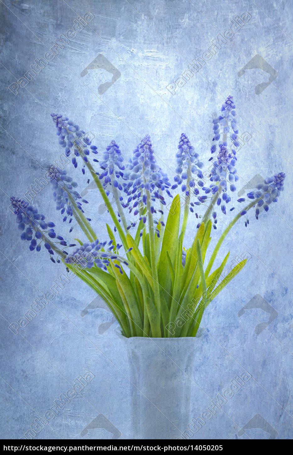 grape, hyacinths, with, superimposed, texture - 14050205