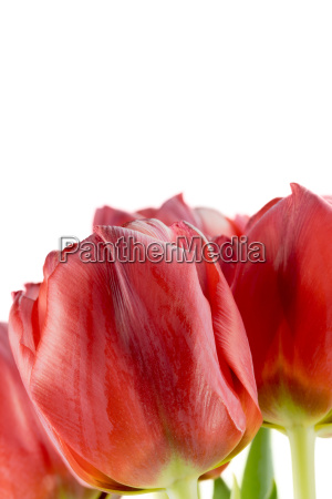 closeup, of, the, bouquet, of, red - 14051907