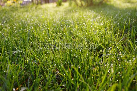 raindrops, on, grass - 14052033