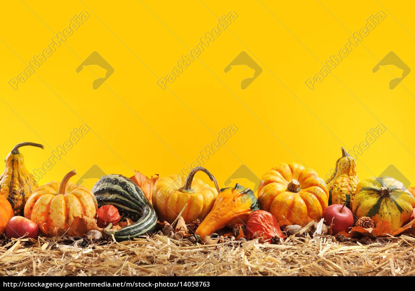 pumpkin, borde - 14058763