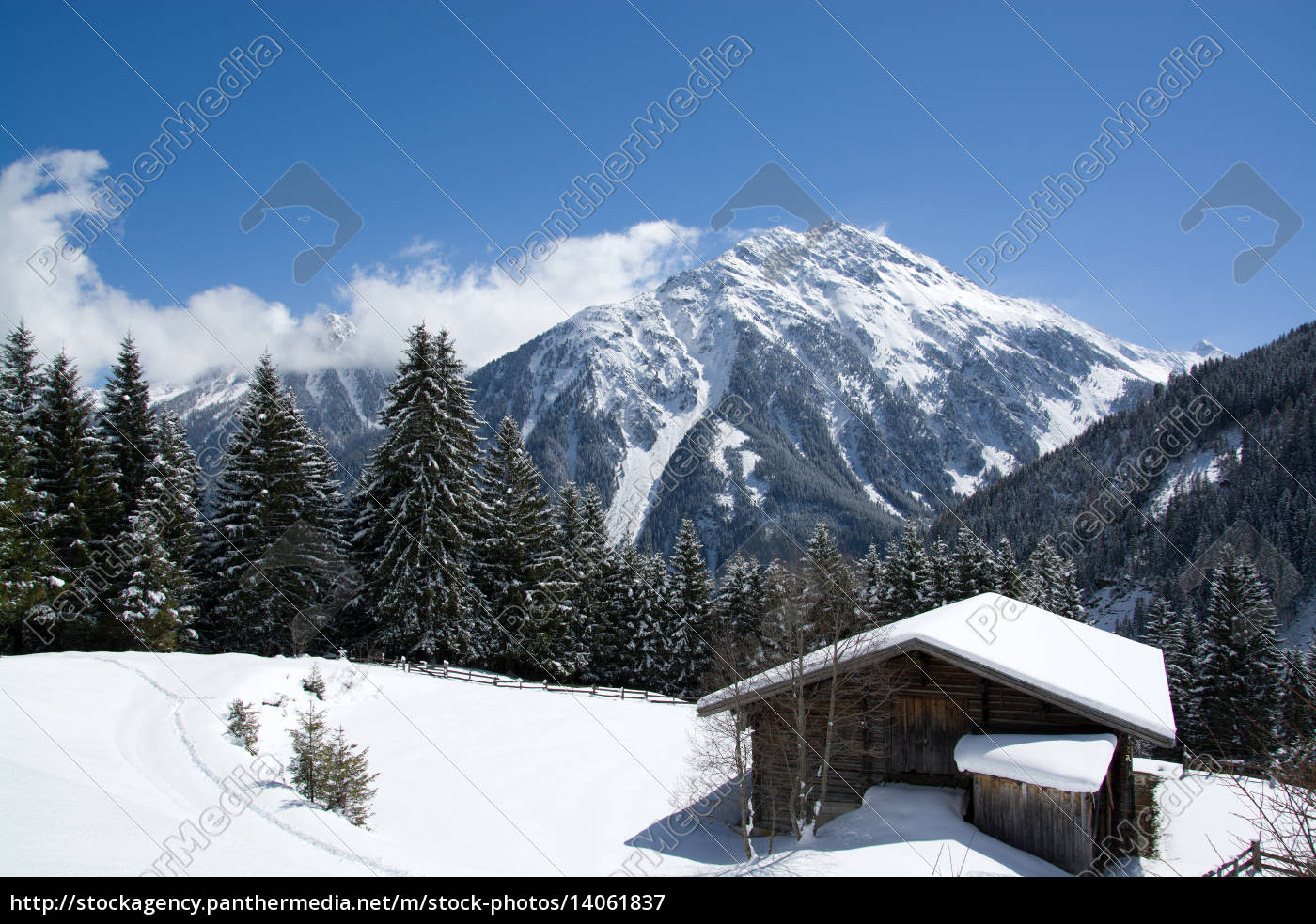 pinzgau, austria - 14061837