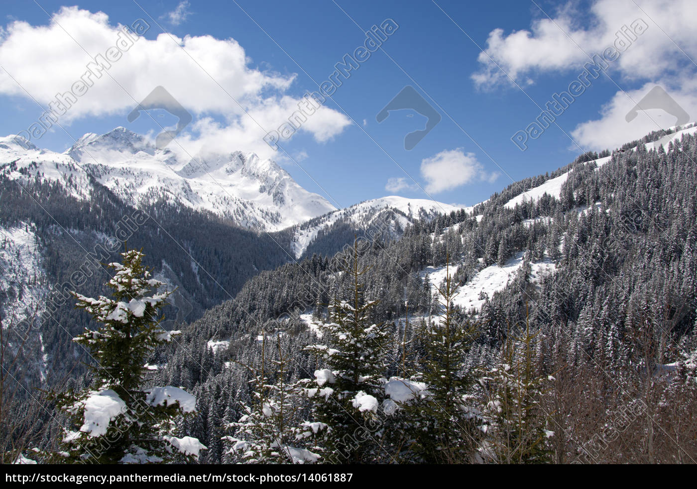 pinzgau, austria - 14061887