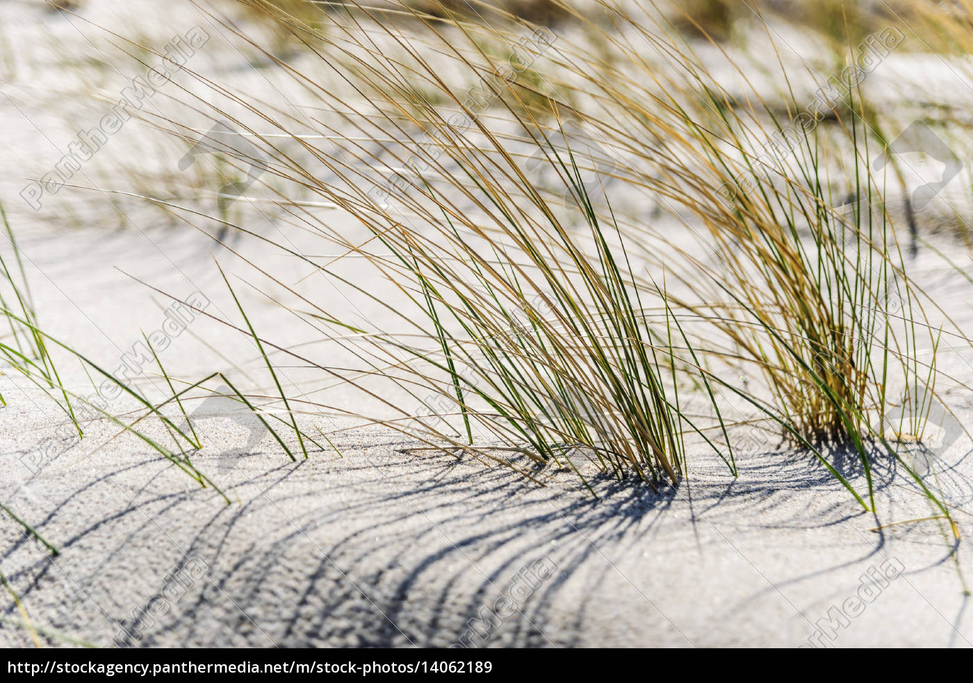 close, dune, grass, on, the, baltic - 14062189