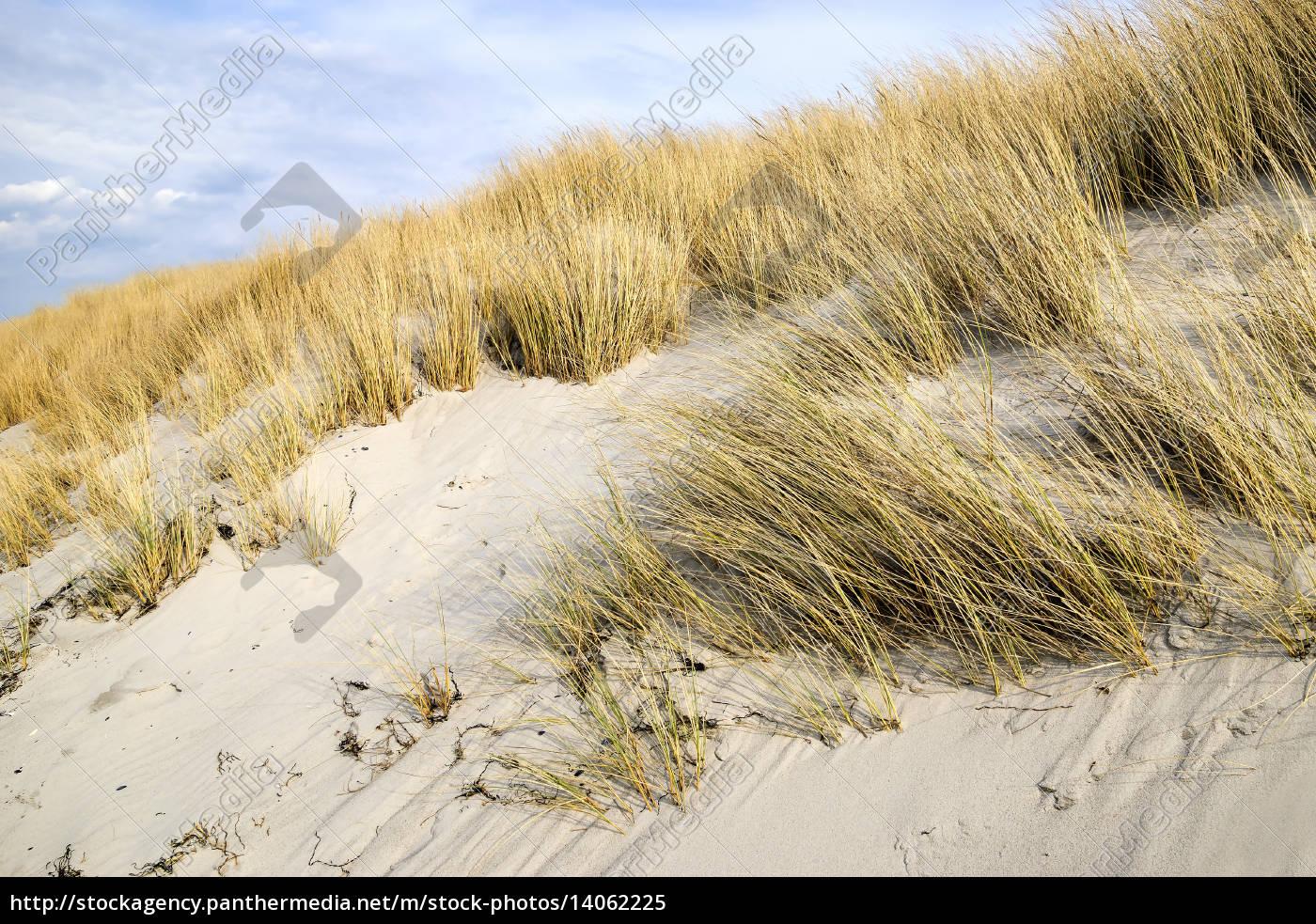 golden, dune, grass, on, the, baltic - 14062225