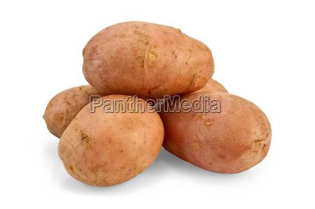 potato, pink - 14063941