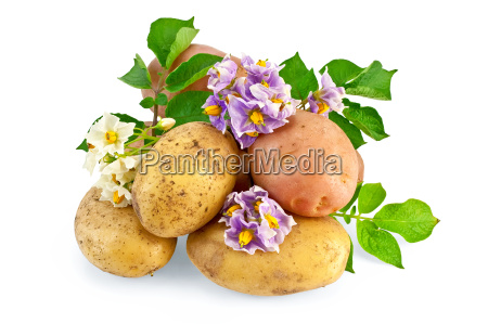 potato, yellow, and, pink, with, a - 14063901