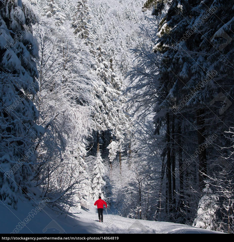 cross-country, skiing - 14064819