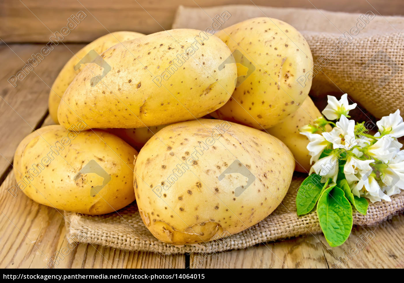 potatoes, yellow, with, flower, on, sacking - 14064015