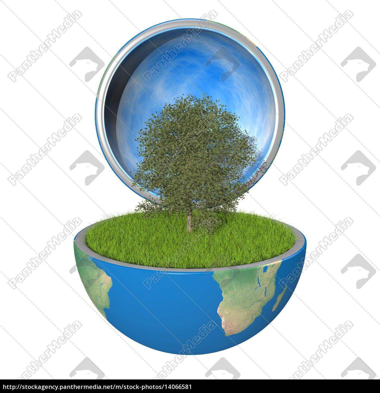 tree, inside, planet - 14066581