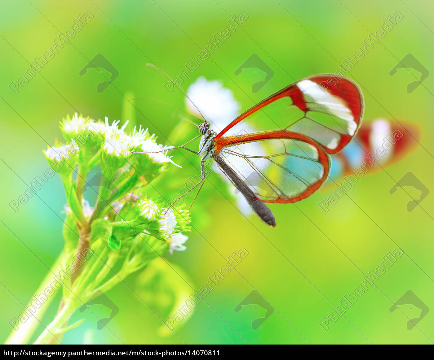 beautiful, butterfly, on, flower - 14070811
